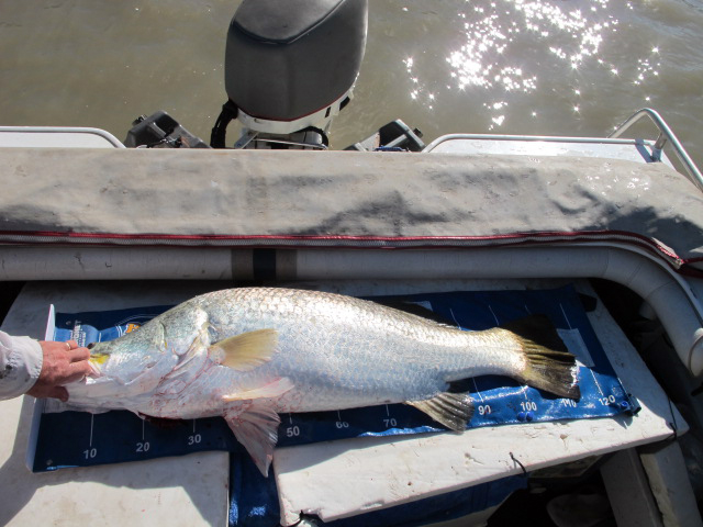 Anne Griffiths 117cm Barramundi, Mary River, Northern Territory